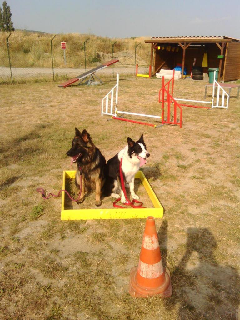 club canin orange 84100