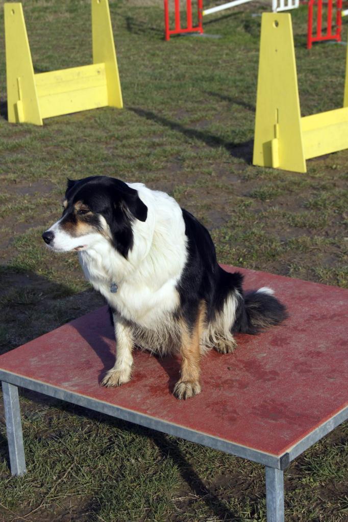 club canin 82